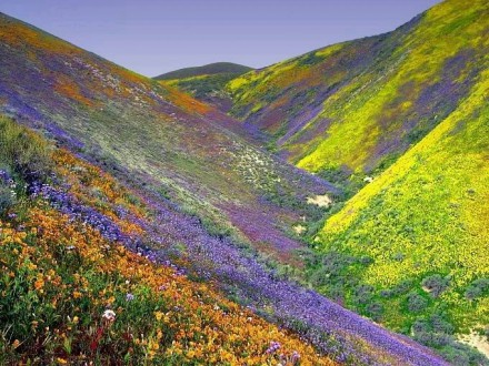 Wild flowers valley in Dalat