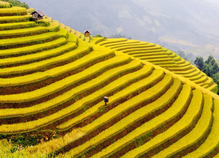 What the amazing rice terraces!