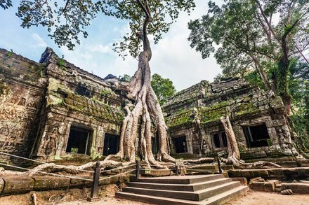 cambodia Ta Prohm Temple